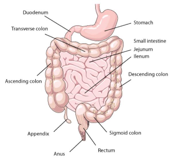 Nutrient Absorbtion