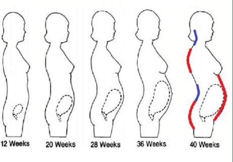 Pregnancy 12 Weeks – 40 Weeks
